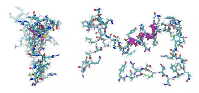 adrenomedullin, peptide, molecule